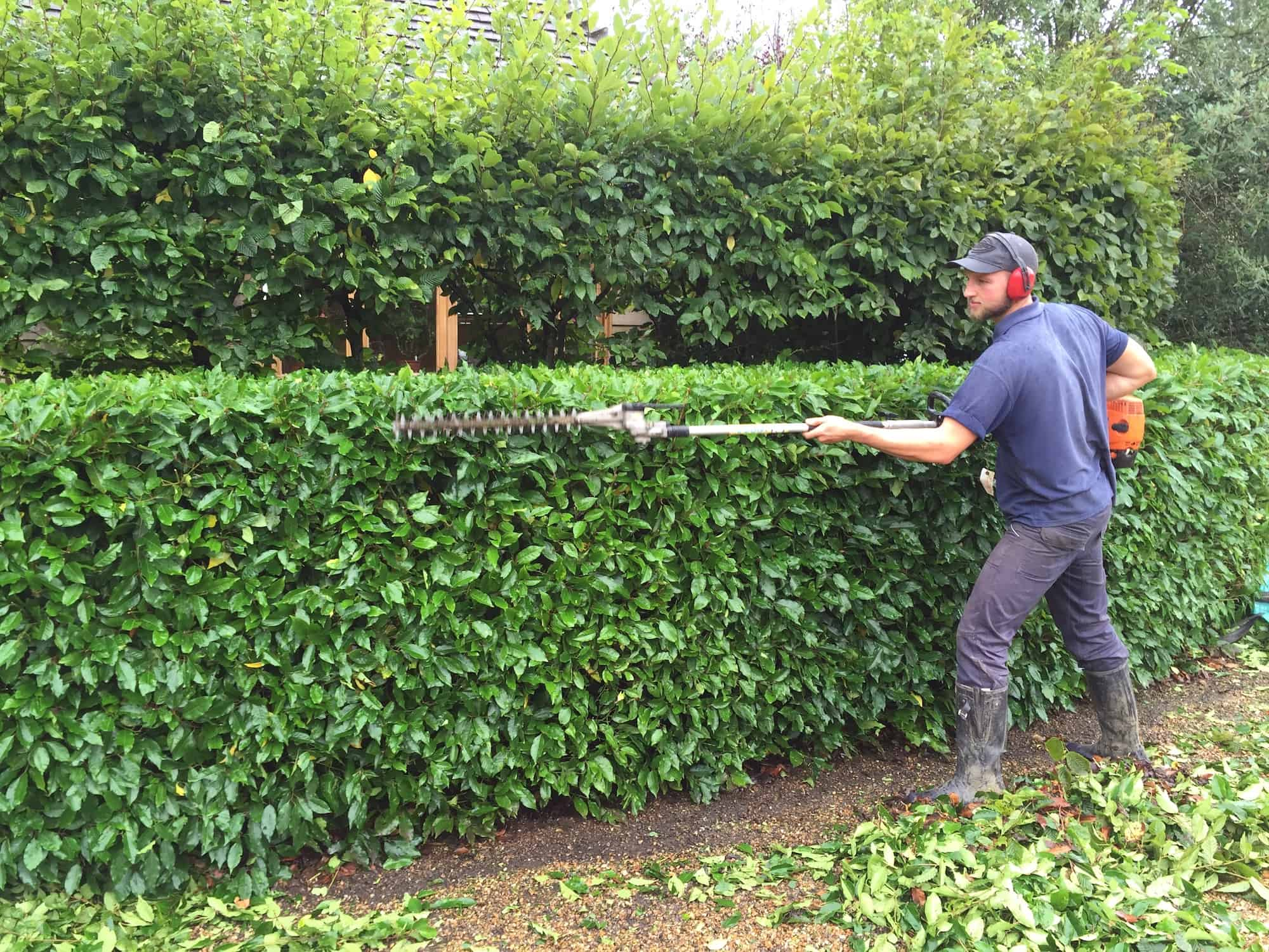 Grounds and Garden Maintenance. Hedge trimming, pruning, lawn mowing, strimming, leaf blowing, clearing and maintenance advice. Kent, Surrey, East Sussex and West Sussex.