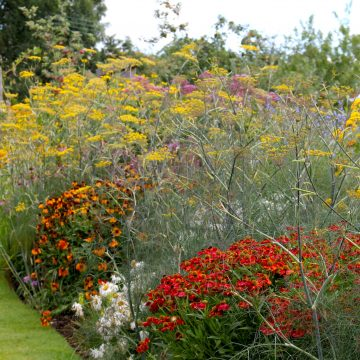Late Summer Border at Leydens Garden. Built and maintained by gardeners in Kent at Roger Platts Garden Design and Nurseries