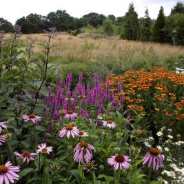 Leydens Garden in Edenbridge in kent. Wildflower meadow. Late summer border