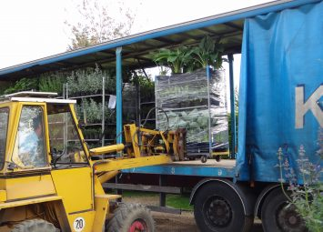 Loading of plants for a garden design project in London. Large plant orders